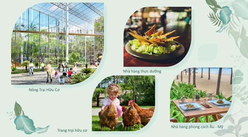 Tại Furama có những trang trại hữu cơ cung cấp thực phẩm dưỡng sinh cho chuỗi các nhà hàng thực dưỡng, nhà hàng sinh thái.